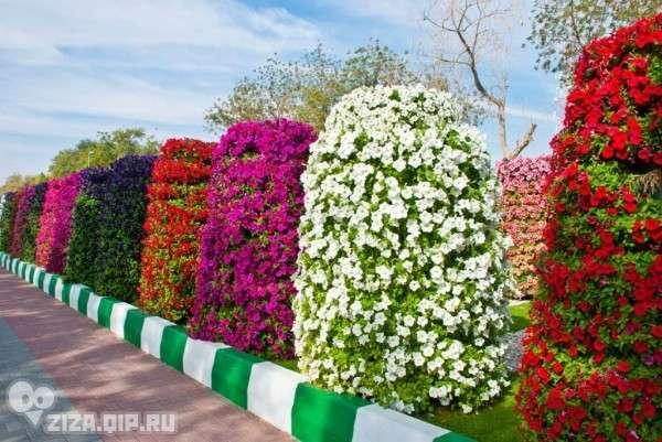 Великолепный парк цветов Al Ain Paradis