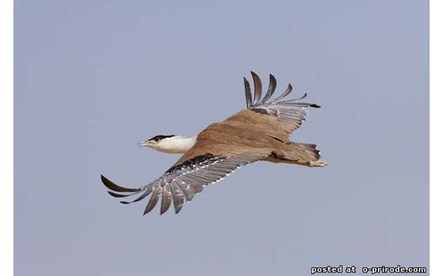 Редкие виды птиц