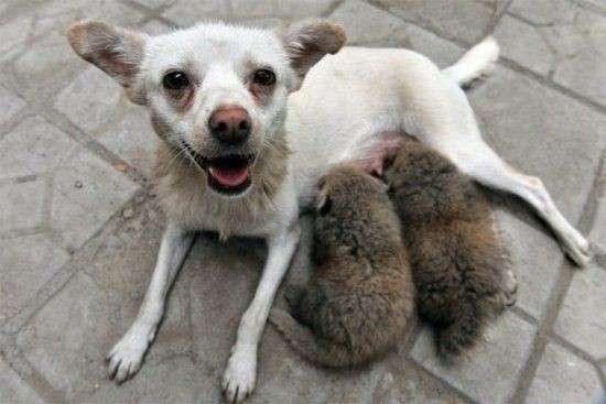 Необычные усыновления в мире животных