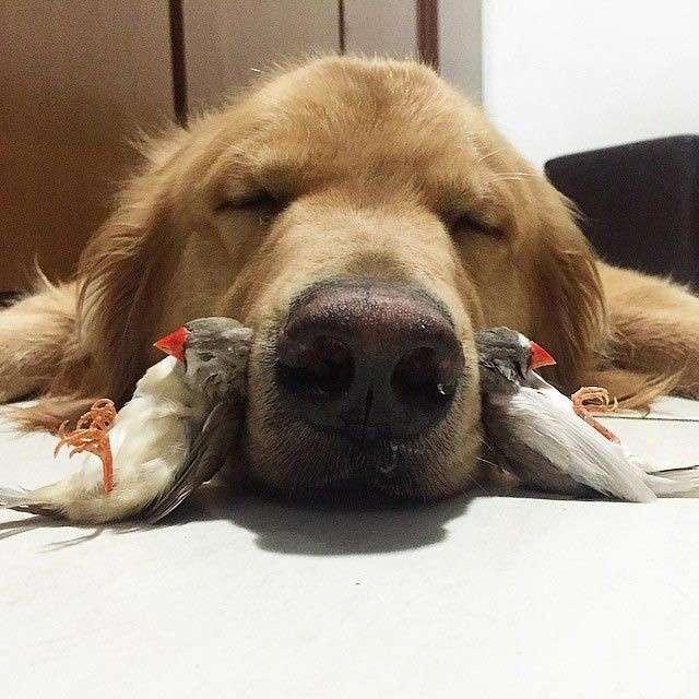 Собака, хомячок и 8 попугаев - необычные лучшие друзья.