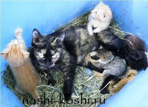 Необычные усыновления в мире кошек