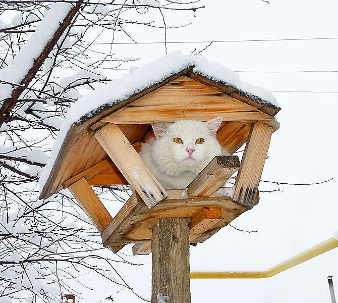 Коты в кормушках